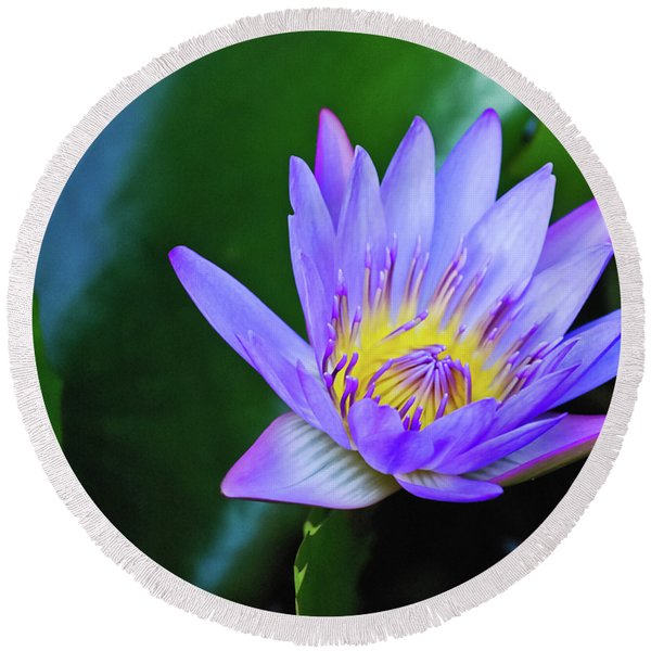 Purple Water Lily Round Beach Towel