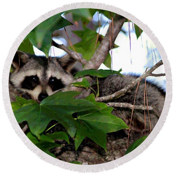Raccoon Eyes Round Beach Towel