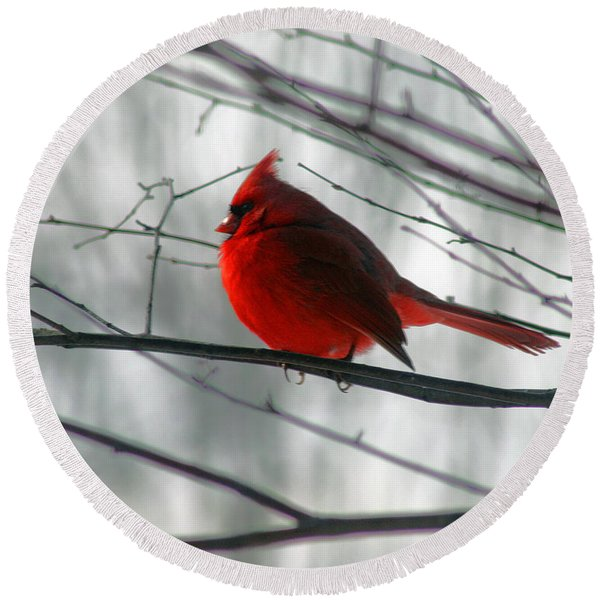 Red Cardinal On Winter Branch  Round Beach Towel