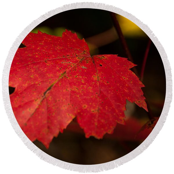 Red Maple Leaf In Fall Round Beach Towel