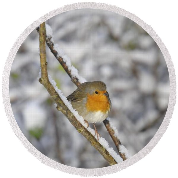 Robin At Winter Round Beach Towel