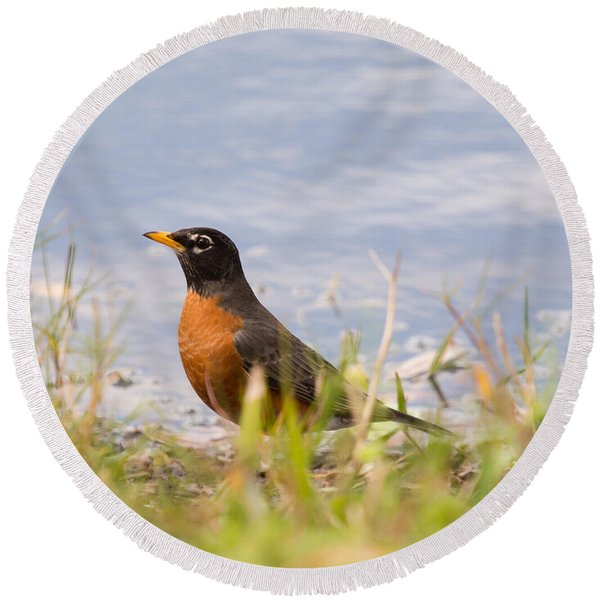Robin Viewing Surroundings Round Beach Towel