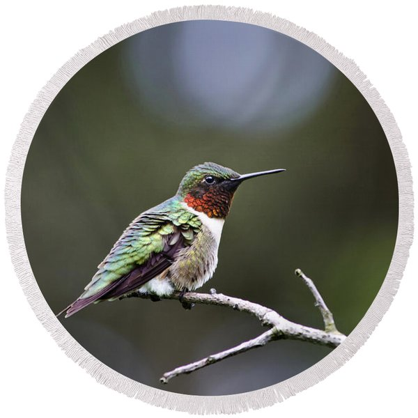 Ruby Throated Hummingbird Spotlight Round Beach Towel