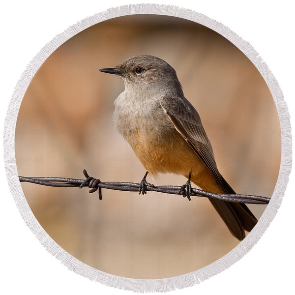 Say's Phoebe On A Barbed Wire Round Beach Towel