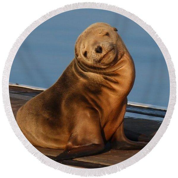 Shy Sea Lion Pup  Round Beach Towel