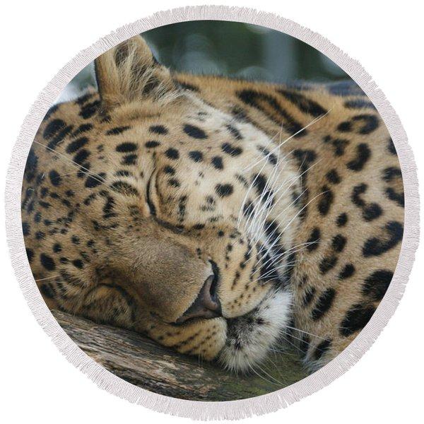 Sleeping Leopard Round Beach Towel