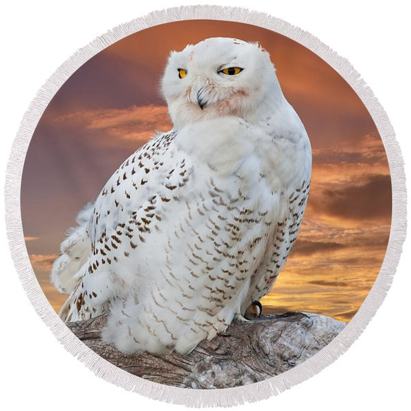 Snowy Owl Perched At Sunset Round Beach Towel
