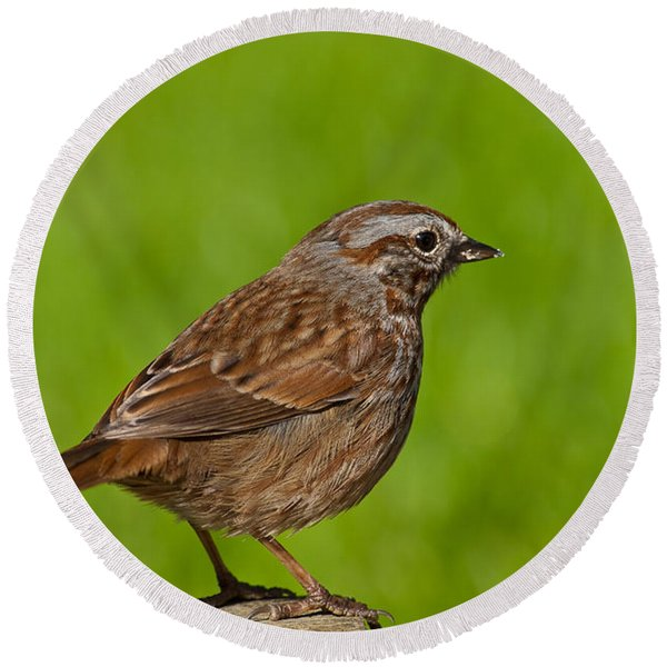 Song Sparrow On A Log Round Beach Towel