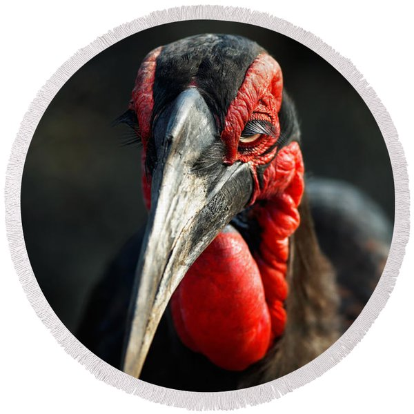 Southern Ground Hornbill Portrait Front View Round Beach Towel