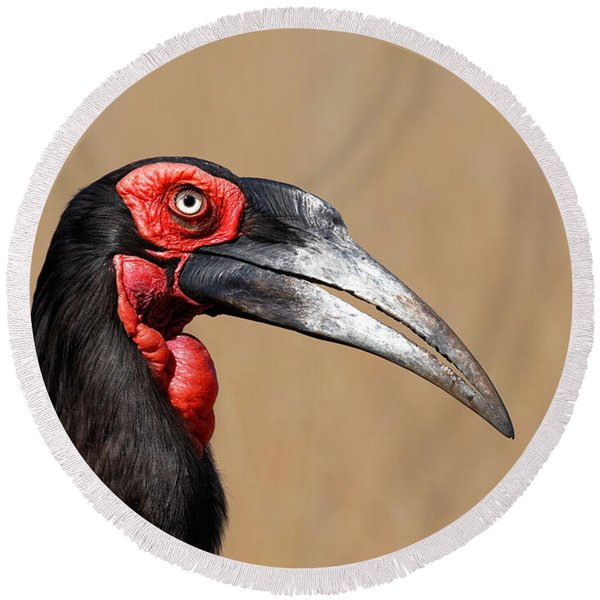 Southern Ground Hornbill Portrait Side View Round Beach Towel