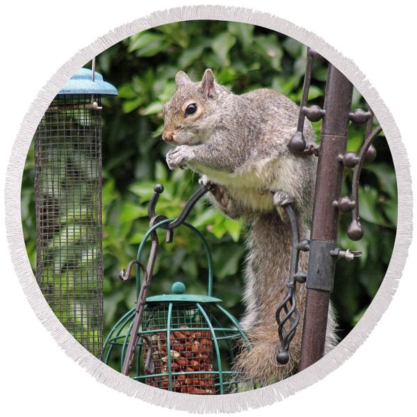 Squirrel Eating Nuts Round Beach Towel