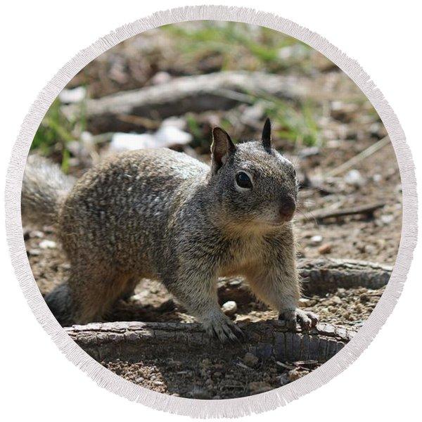Squirrel Play  Round Beach Towel