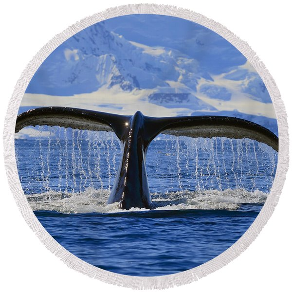 Tails From Antarctica Round Beach Towel