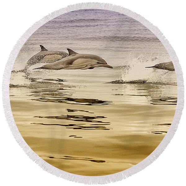 Dolphin Canvas Print, Photographic Print, Art Print, Framed Print, Greeting Card, Iphone Case, Round Beach Towel