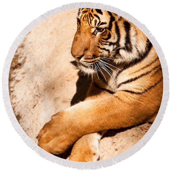 Tiger Resting Round Beach Towel