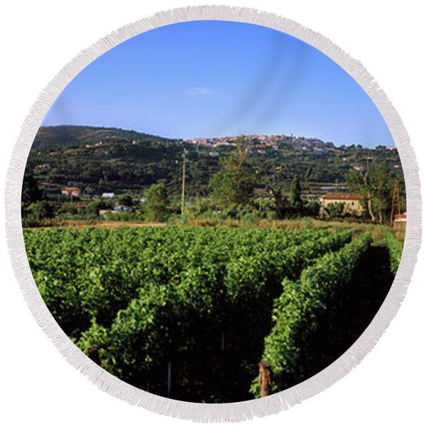 Vineyard, Portoferraio, Island Of Elba Round Beach Towel