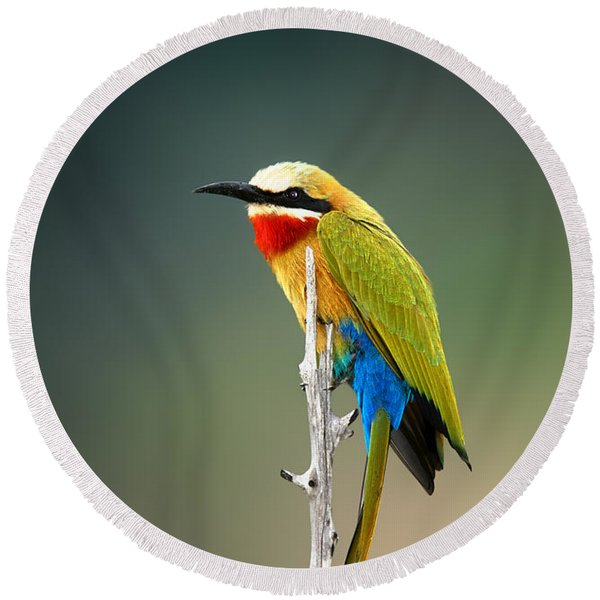 Whitefronted Bee-eater Round Beach Towel