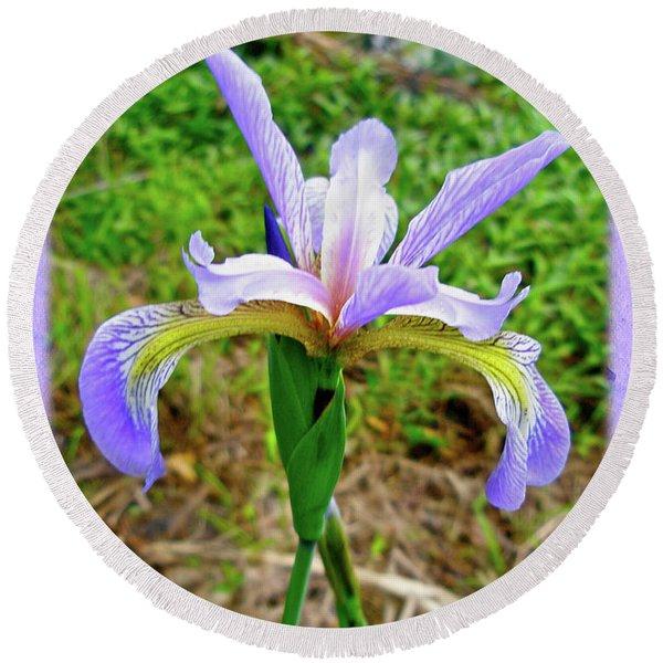Wild Flag - Iris Versicolor Round Beach Towel