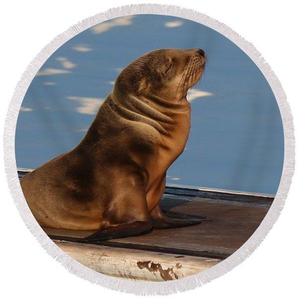 Wild Pup Sun Bathing - 2 Round Beach Towel