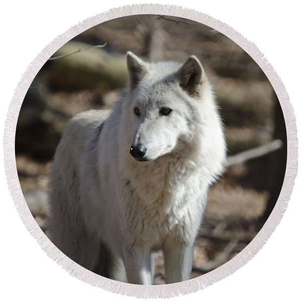 Timber Grey Wolf Round Beach Towel