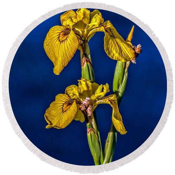 Yellow Wild Iris Round Beach Towel