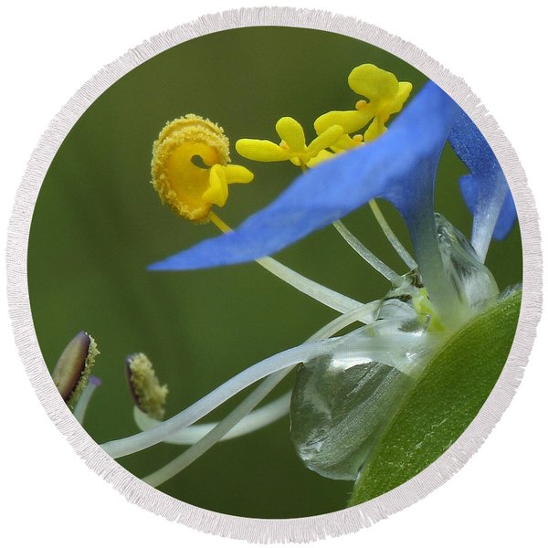 Close View Of Slender Dayflower Flower With Dew Round Beach Towel