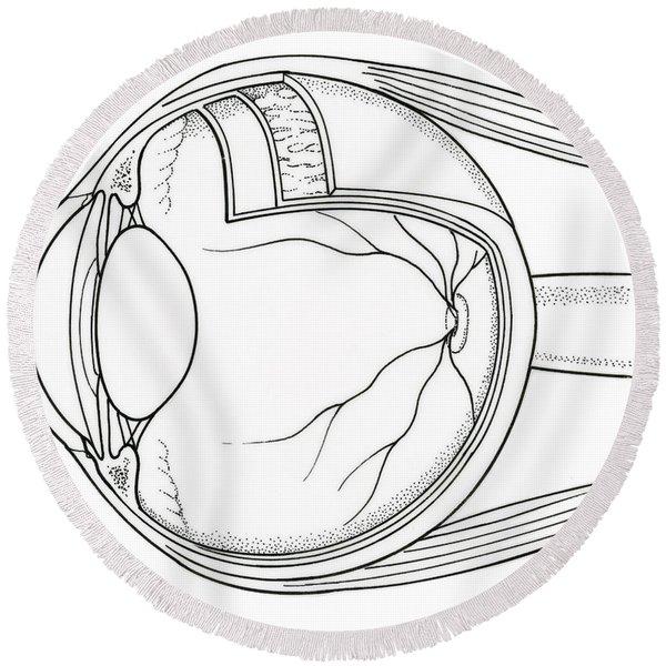 Illustration Of Eye Anatomy Round Beach Towel
