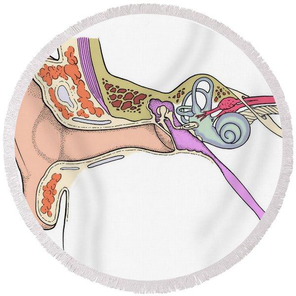 Illustration Of Ear Anatomy Round Beach Towel