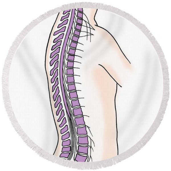 Illustration Of Spinal Nerves Round Beach Towel