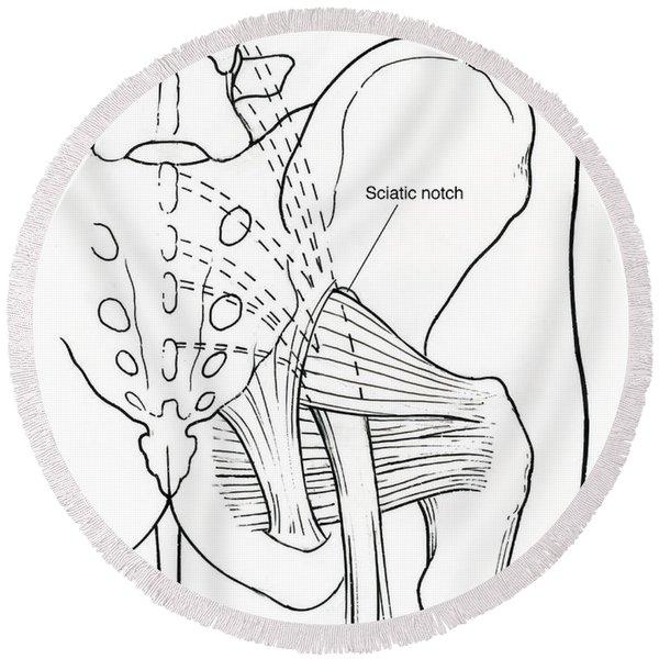 Illustration Of Human Pelvis Round Beach Towel