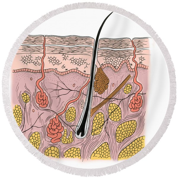Illustration Of Skin Section Round Beach Towel