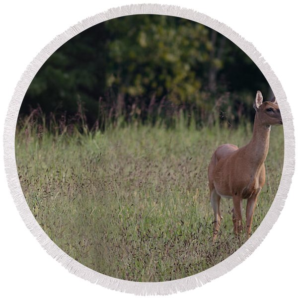 Alert Doe And Fawn Round Beach Towel