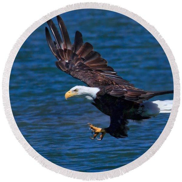 Bald Eagle On The Hunt Round Beach Towel