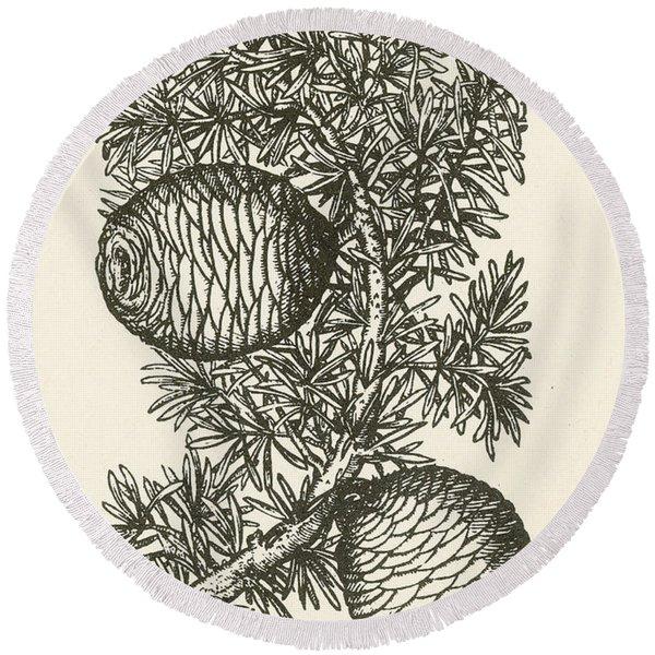 Cassia Tree, Alchemy Plant Round Beach Towel