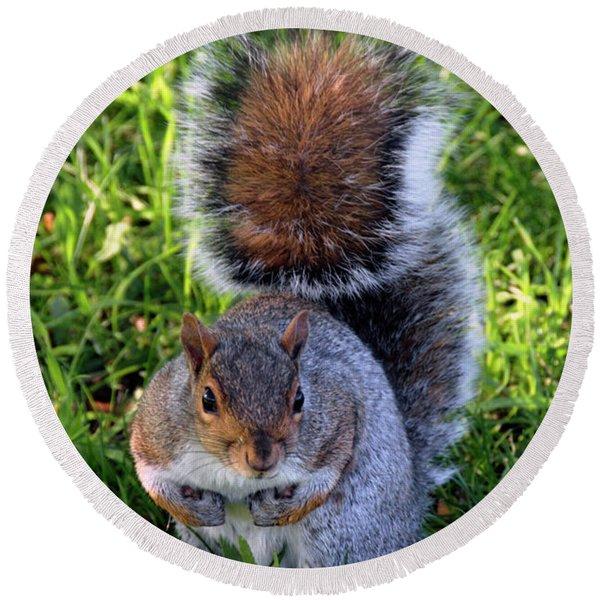 City Squirrel Round Beach Towel