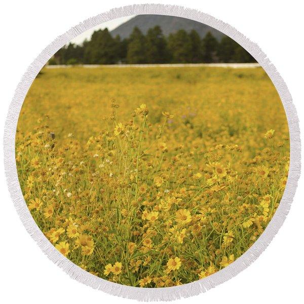 Field Of Yellow Daisy's Round Beach Towel