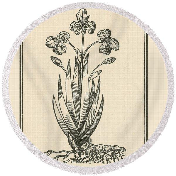 Florentine Iris, Mattiolis Commentaires Round Beach Towel