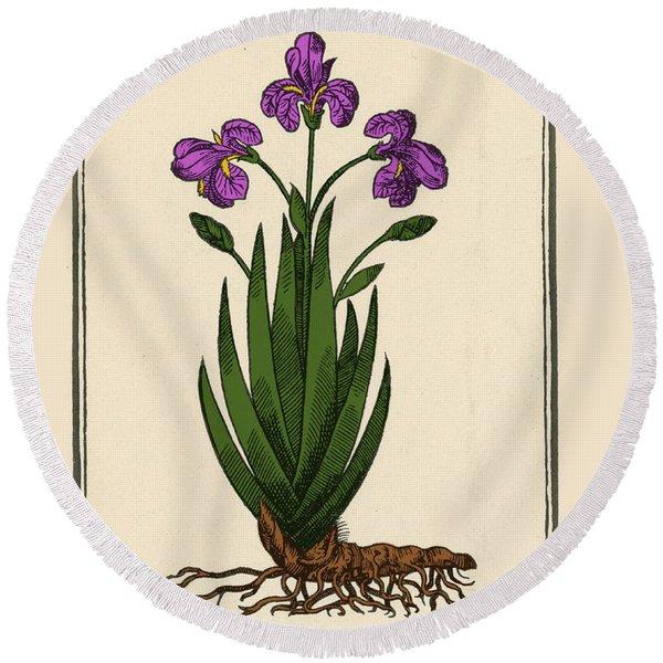 Florentine Iris, Mattiolis Round Beach Towel