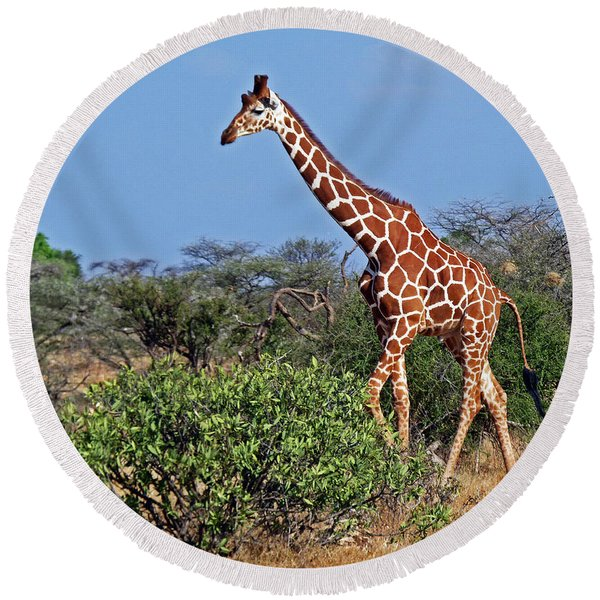 Giraffe Against Blue Sky Round Beach Towel