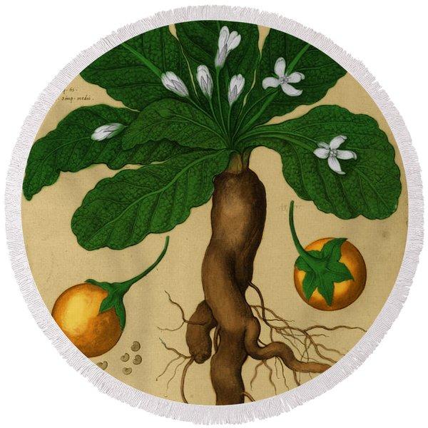 Mandrake Root, Alchemy Plant Round Beach Towel