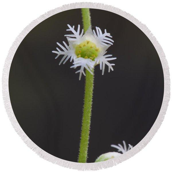 Miterwort Flowers Round Beach Towel