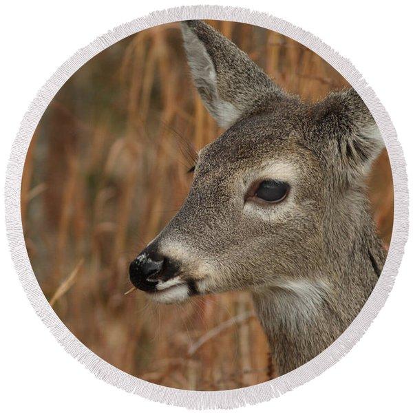 Portrait Of  Browsing Deer Round Beach Towel