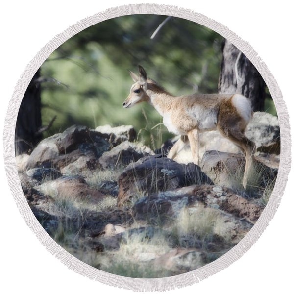 Pronghorn Antelope Fawn Round Beach Towel