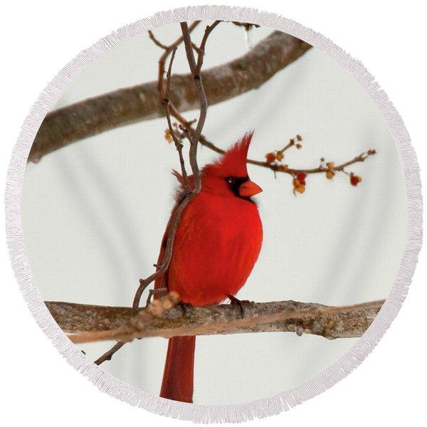 Righteous Cardinal Round Beach Towel