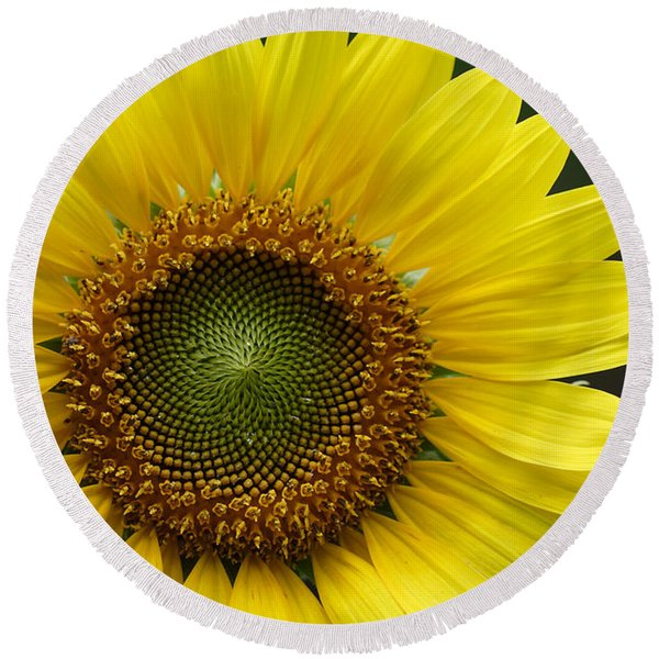 Sunflower With Insect Round Beach Towel