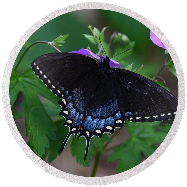Tiger Swallowtail Female Dark Form On Wild Geranium Round Beach Towel