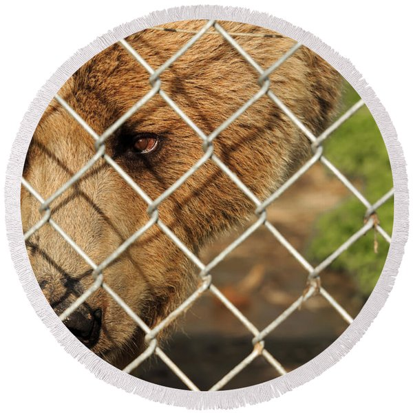 Caged Bear Round Beach Towel