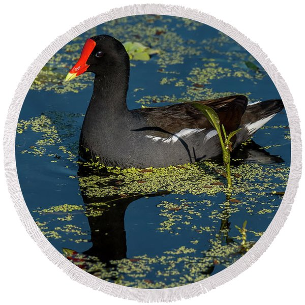 Moorhen Round Beach Towel
