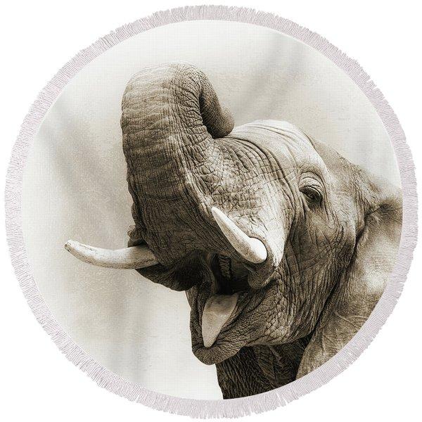 African Elephant Closeup Square Round Beach Towel