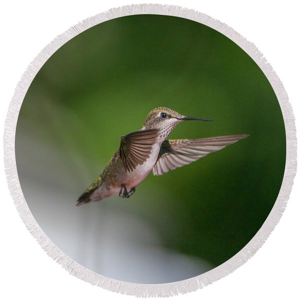 Female Ruby Throated Hummingbird Round Beach Towel